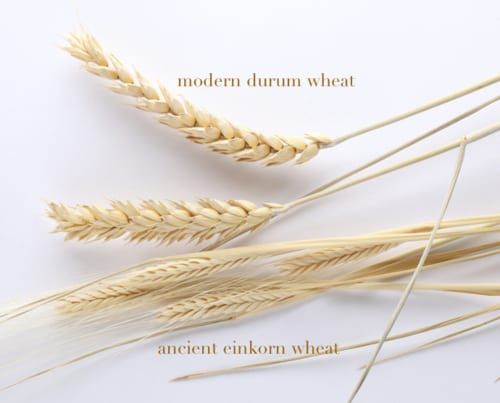 Ancient wheat stems and durum wheat.