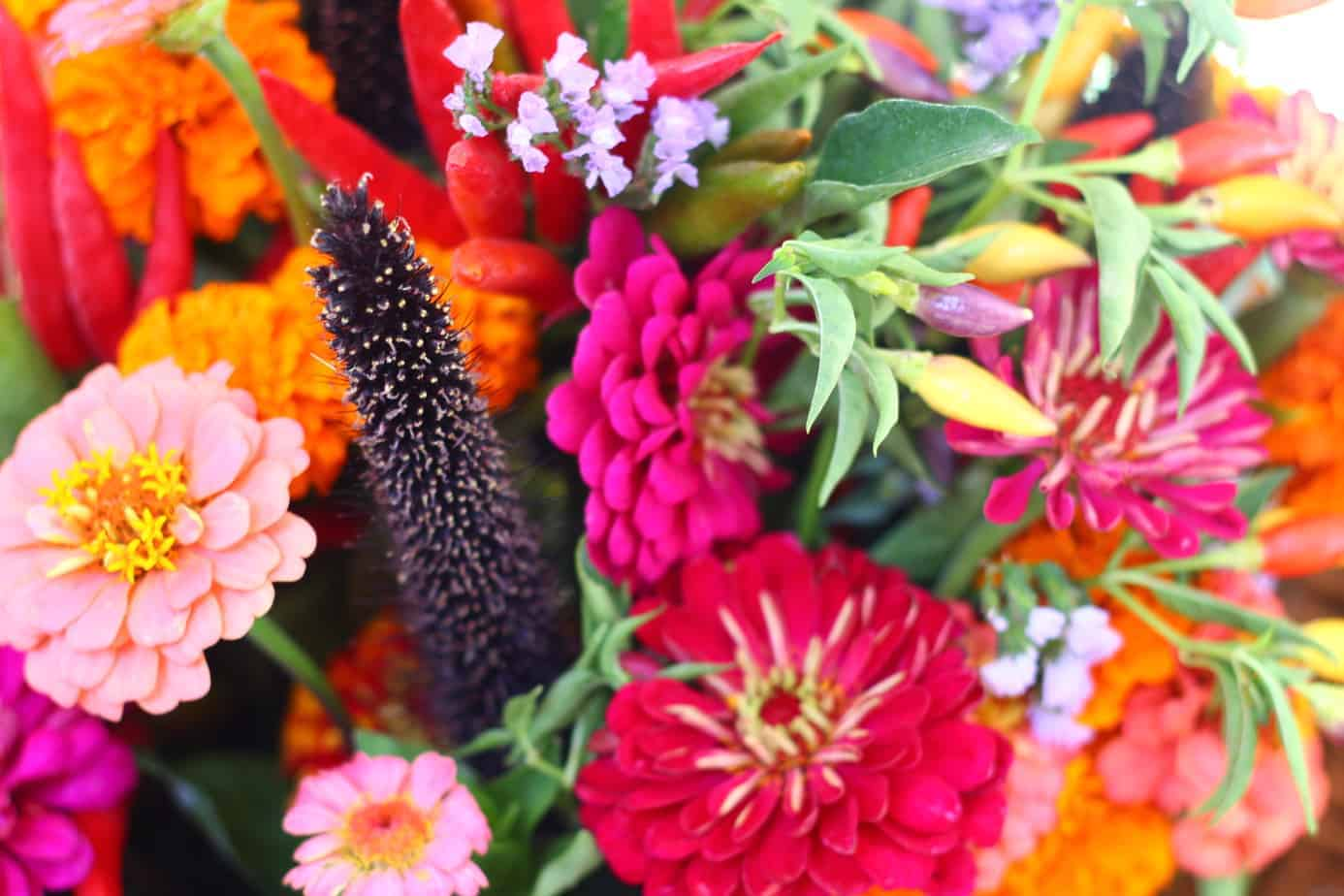 Flowers at Farm-To-Fork Festival