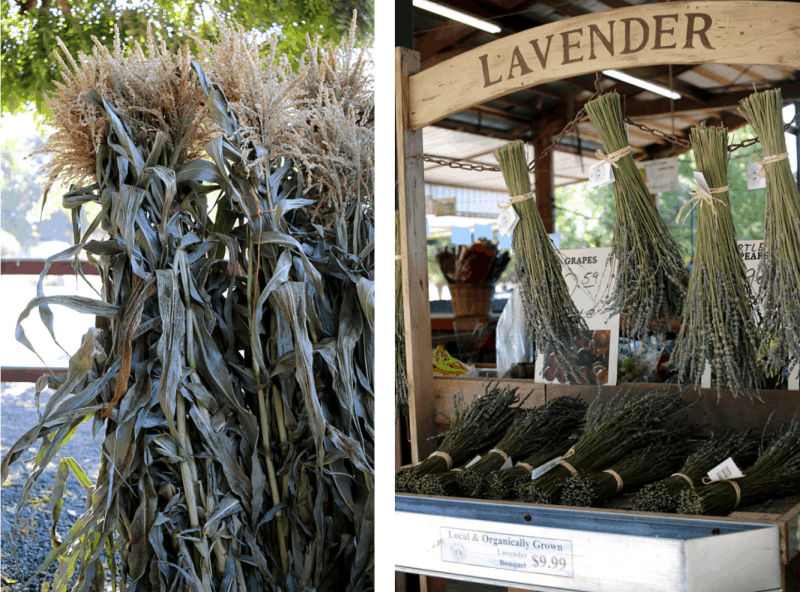 Corn stalks and bundles of lavender