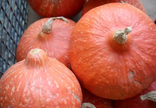 Three Red Kuri squash