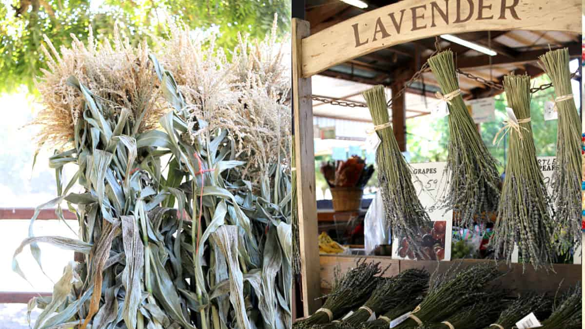 Corn stalks and dried lavender.