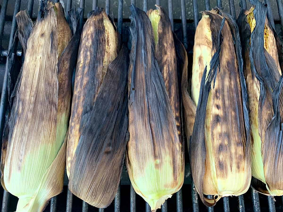 Charred corn husks on corn from grilling